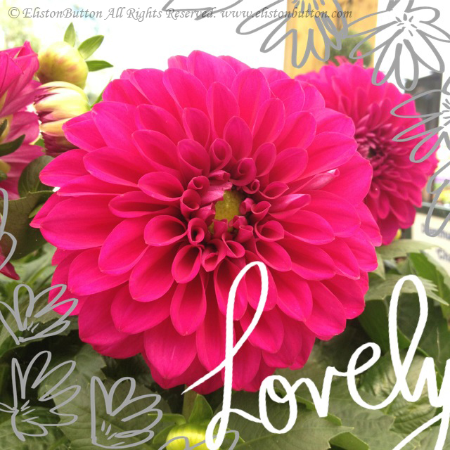 A Beautiful Mess App Lettering - Lovely Hot Pink Dahlia Flower - A New Way of Scrapbooking? at www.elistonbutton.com - Eliston Button - That Crafty Kid – Art, Design, Craft & Adventure.