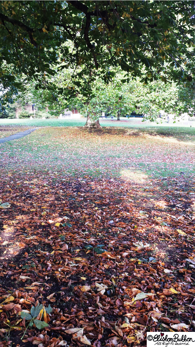 Beautiful Autumn Leaves in the Park - Autumn Glitter and I'm No Quitter at www.elistonbutton.com - Eliston Button - That Crafty Kid – Art, Design, Craft & Adventure.