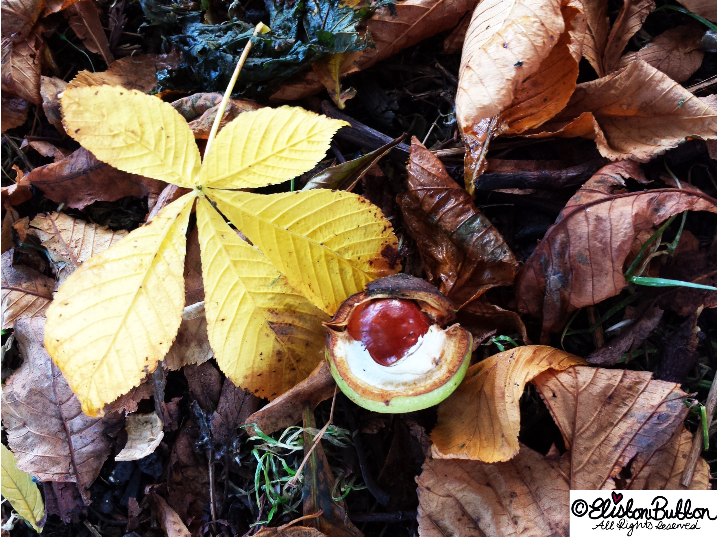 A Conker in it's Shell Amongst Autumn Leaves - Autumn Glitter and I'm No Quitter at www.elistonbutton.com - Eliston Button - That Crafty Kid – Art, Design, Craft & Adventure.