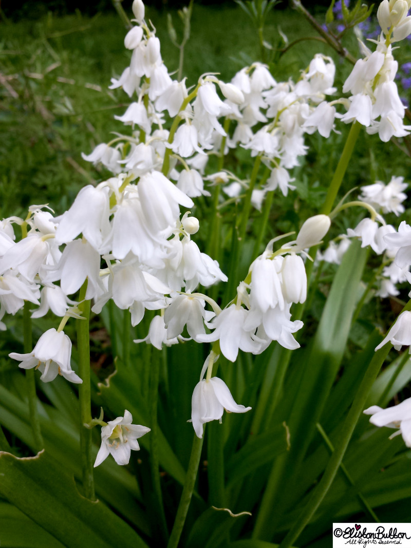 An Evening Walk in Spring at www.elistonbutton.com - Eliston Button - That Crafty Kid
