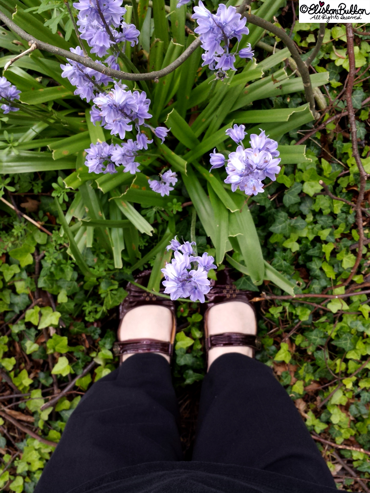 Bluebells and Pretty Shoes - An Evening Walk in Spring at www.elistonbutton.com - Eliston Button - That Crafty Kid – Art, Design, Craft & Adventure.