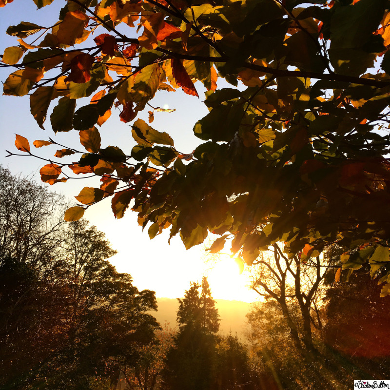 Golden Sunset Through the Autumn Leaves at Dovers Hill, Cotswolds - Around Here...October 2015 at www.elistonbutton.com - Eliston Button - That Crafty Kid – Art, Design, Craft & Adventure.