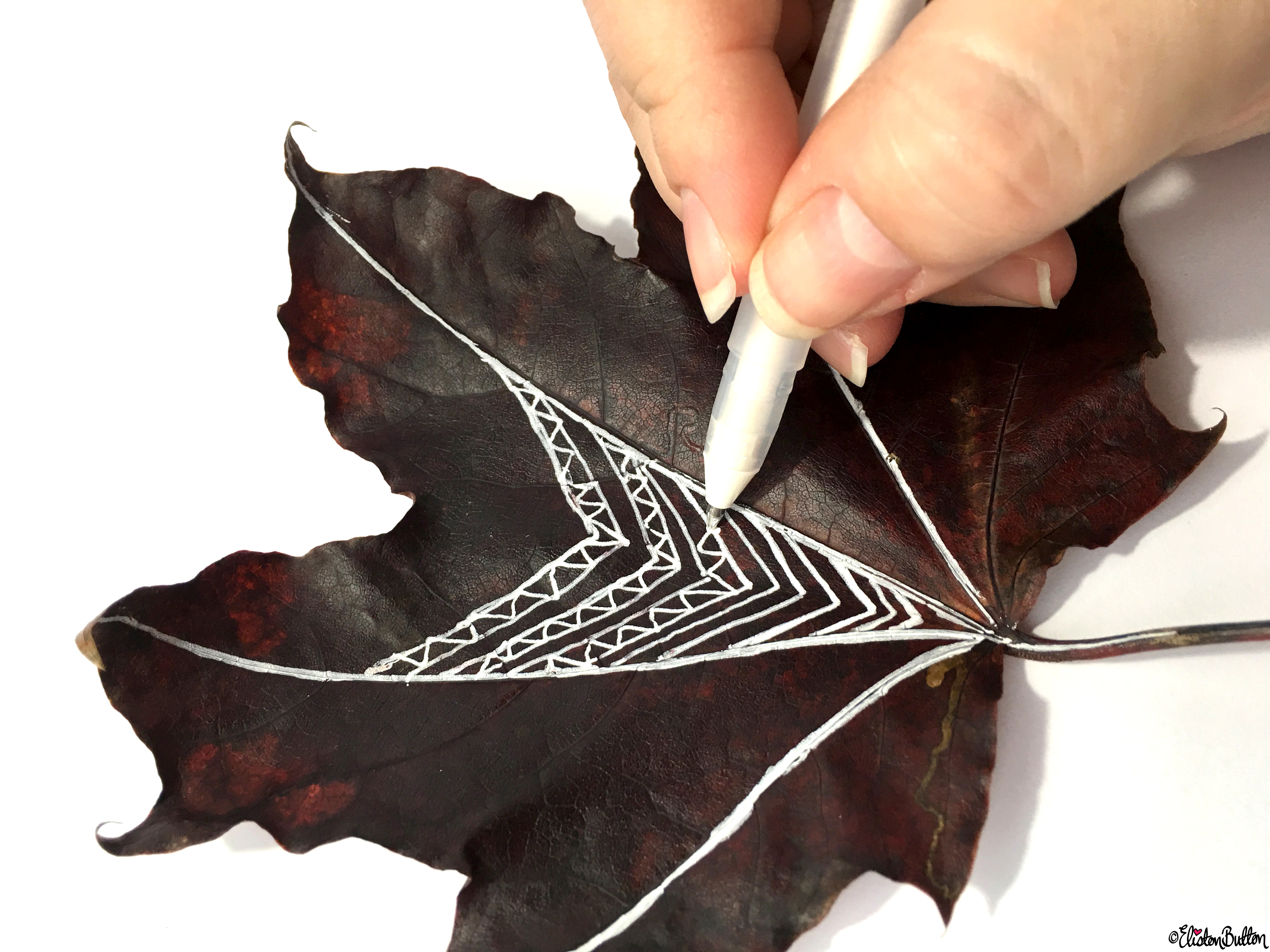 Drawing on Autumn Leaves with White Ink - Workspace Wednesday - Autumn Leaf Art at www.elistonbutton.com - Eliston Button - That Crafty Kid – Art, Design, Craft & Adventure.