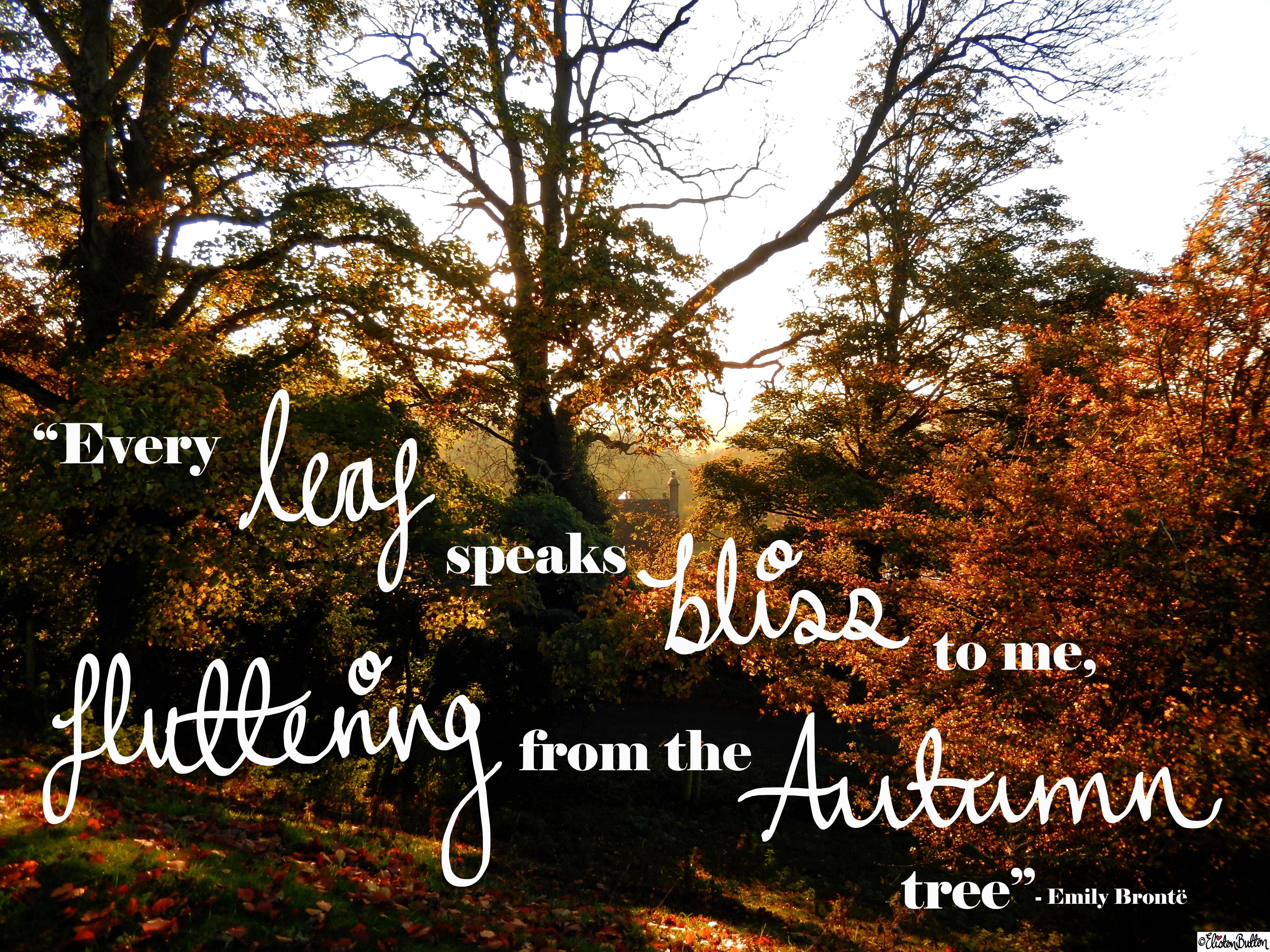 Every Leaf Speaks Bliss To Me, Fluttering From The Autumn Tree   Emily  Bronte Quote