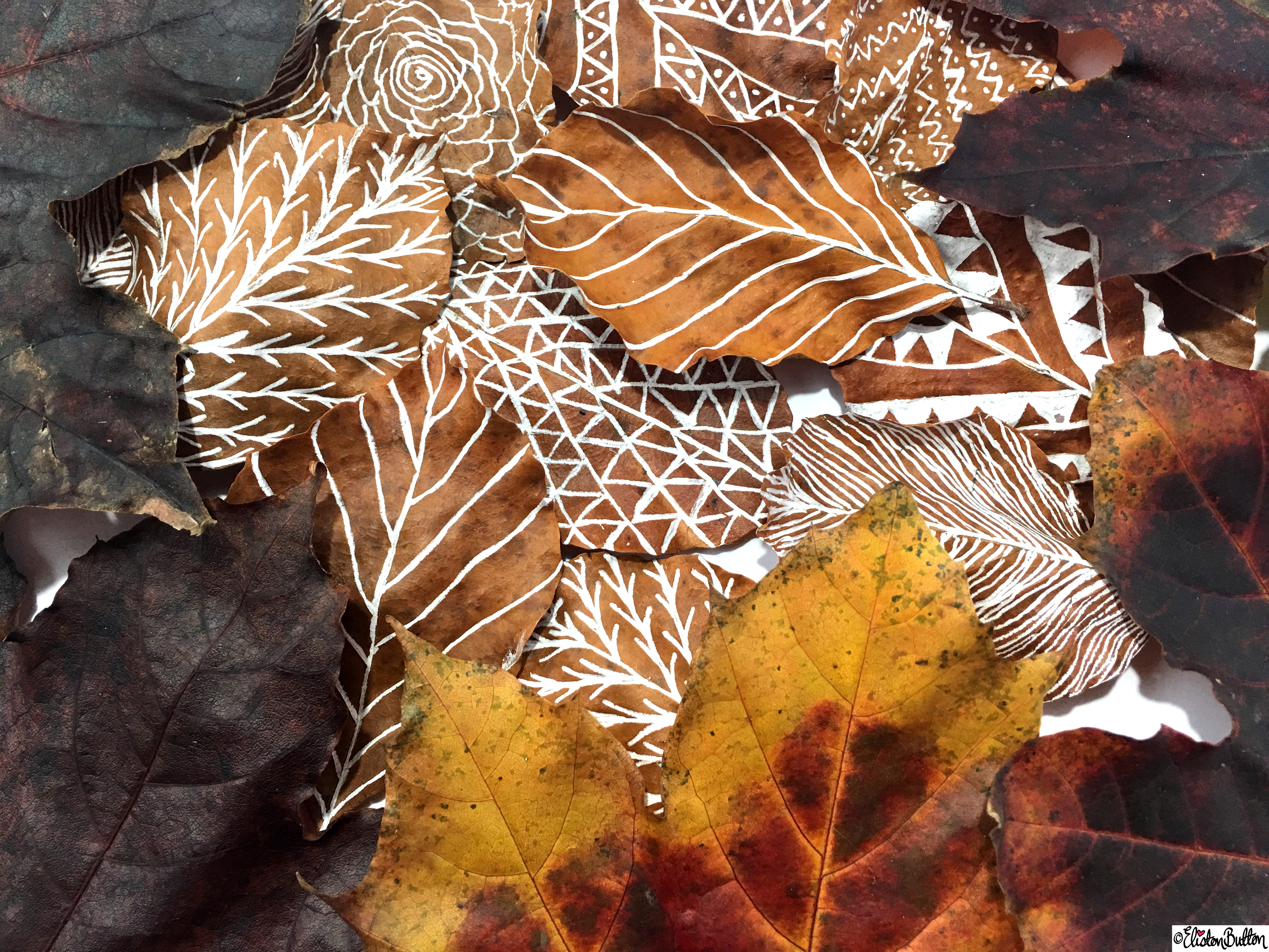 Illustrated Leaves amongst Natural Autumn Leaves - Workspace Wednesday - Autumn Leaf Art at www.elistonbutton.com - Eliston Button - That Crafty Kid – Art, Design, Craft & Adventure.