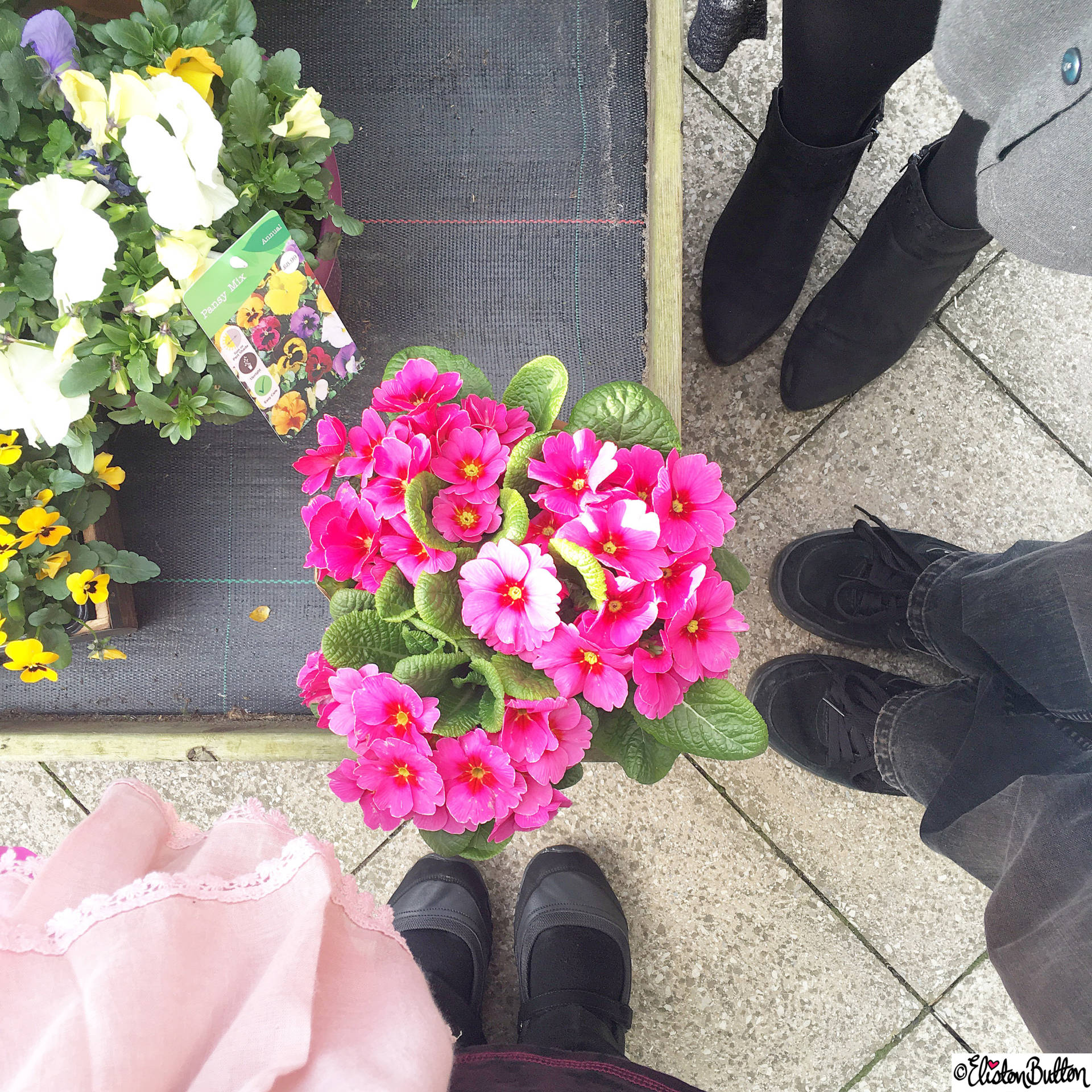 Day 02 - Looking Down - Flowers and Friends - Photo-a-Day – April 2016 at www.elistonbutton.com - Eliston Button - That Crafty Kid – Art, Design, Craft & Adventure.