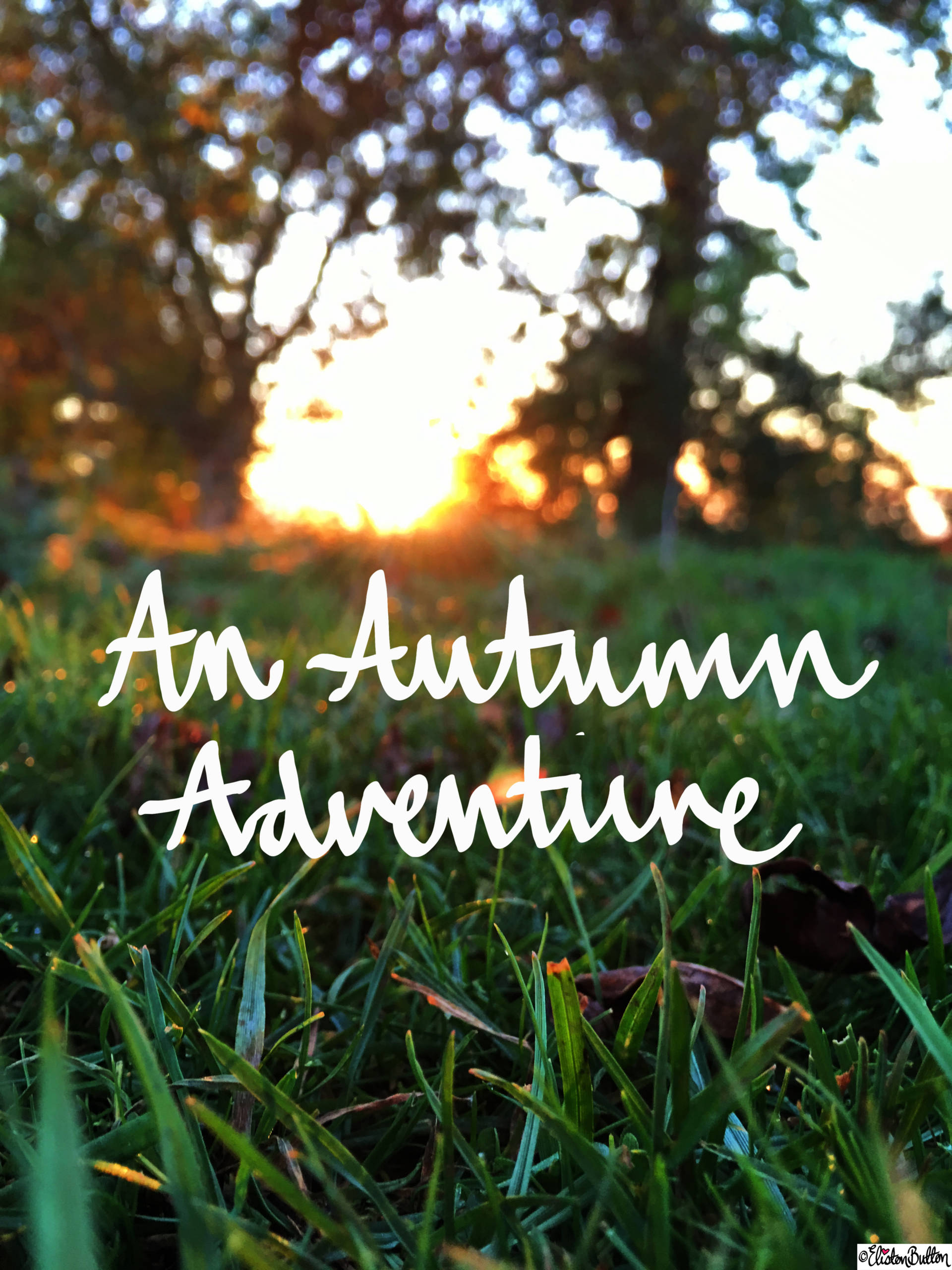 An Autumn Adventure Blog Post - For the Love of…Autumn at www.elistonbutton.com - Eliston Button - That Crafty Kid – Art, Design, Craft & Adventure.