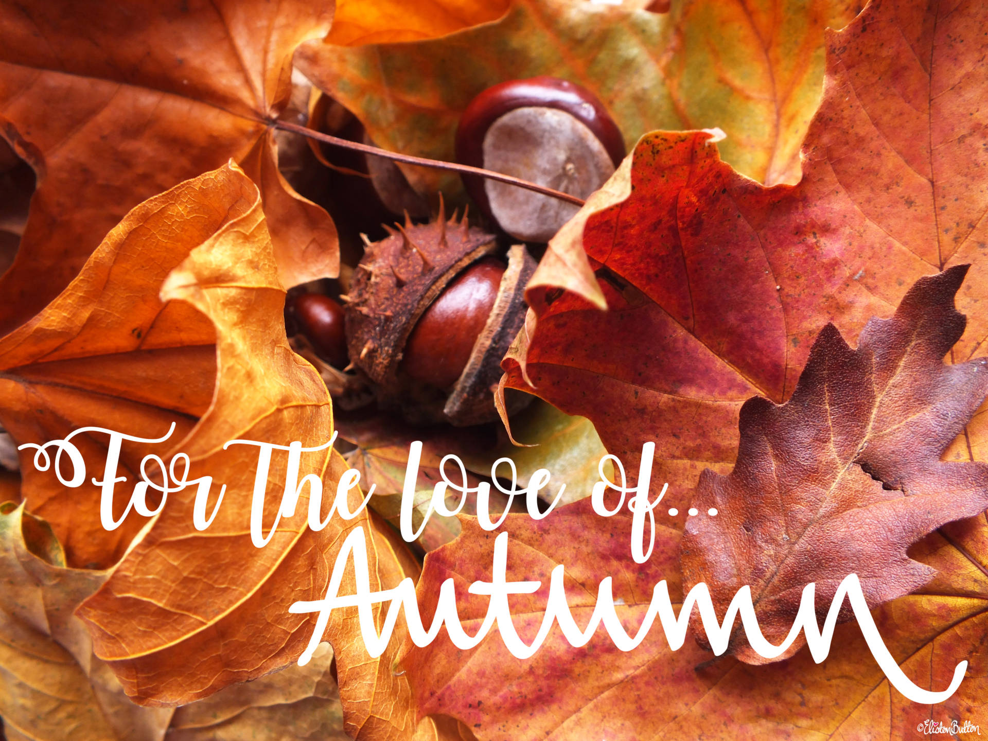 For the Love of Autumn by Eliston Button - Autumn Fall Leaves and Horse Chestnut Conkers - For the Love of…Autumn at www.elistonbutton.com - Eliston Button - That Crafty Kid – Art, Design, Craft & Adventure.