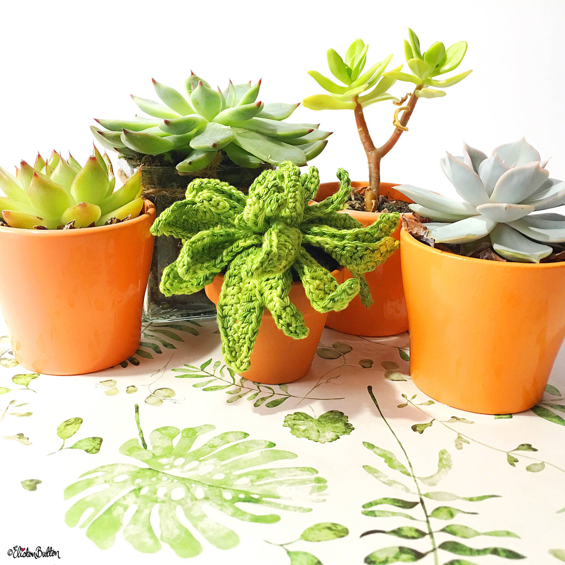 Succulents and a Crochet Succulent on a Beautiful Watercolour Plant Illustration - Around Here…September 2016 at www.elistonbutton.com - Eliston Button - That Crafty Kid – Art, Design, Craft & Adventure.